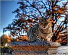 DeviantArt - HDR Lovers - Cat and is cat. by ~Slidragon