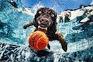 Underwater Dogs by Seth Casteel