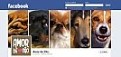 TimeLine da FanPage do portal Amor de Cão