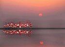 Flamingos - foto de Anna C.