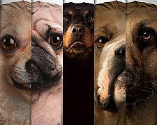 Camisetas de cachorros, estampas com fotos de diversas raças