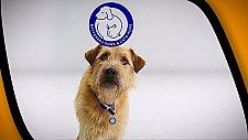Campanha de adoção de animais utiliza outdoor digital com RFID