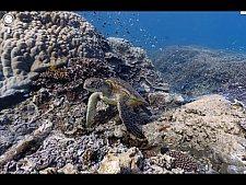 Google Street View agora presente no fundo do mar com fotos 360º