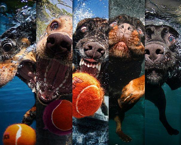 Coleção de fotos de cães de baixo da água por Seth Casteel